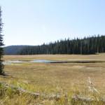Long Meadow.